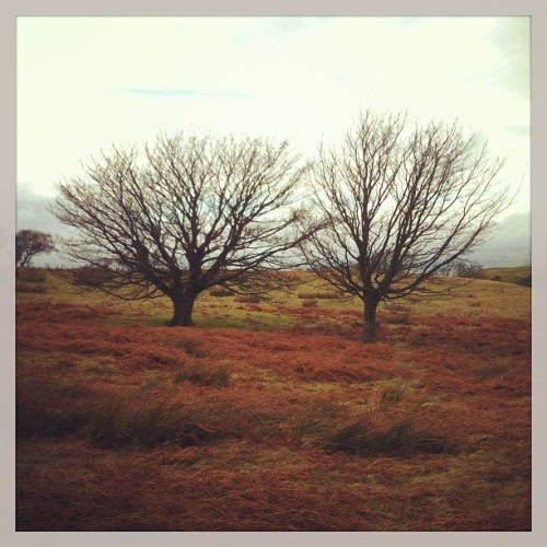 two trees pic